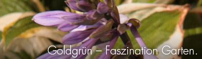 Goldgrün - Faszination Garten.